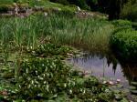 POWSIN - Ogród Botaniczny Polskiej Akademii Nauk