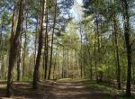 WARSZAWA W OBIEKTYWIE (kolekcja albumów): Zielony oddech Warszawy - Lasek na Kole